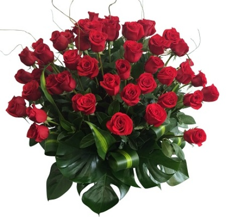 50 Red Rose pot arrangement